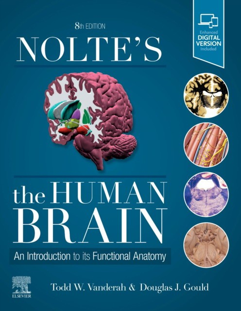 Nolte`S The Human Brain
